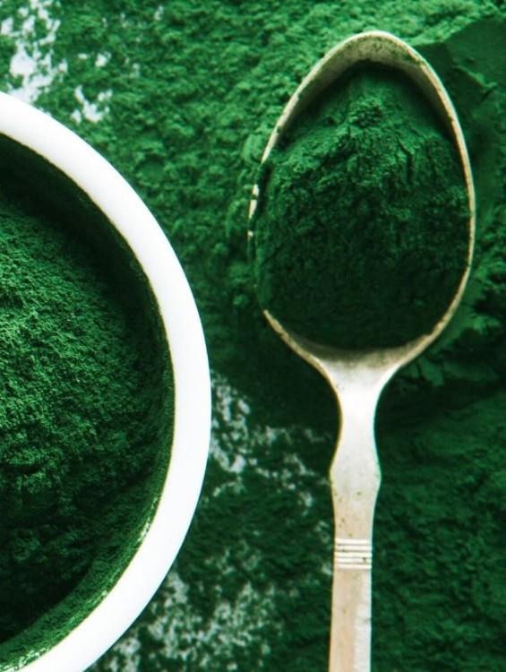 Zöld algákban minőségi a fehérje és aminosav forrás
